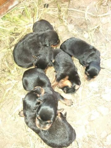 Cachorros - Foto 5
