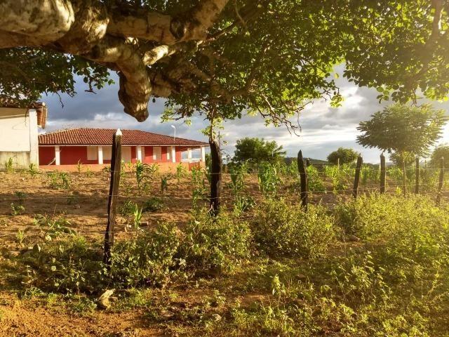 Fazenda 172 tarefas de terra com sede para criaçao de gado e cavalo e plantaçao - Foto 3
