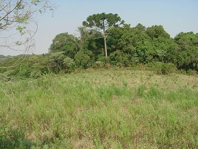 Terreno à venda em Sabiá, Araucária cod:7227-MORO - Foto 8
