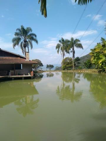 Sítio tifa bom Jesus reflorestamento - Foto 4