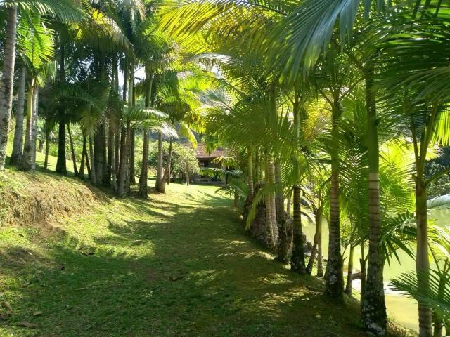 Sítio tifa bom Jesus reflorestamento - Foto 12