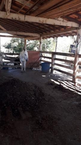 Fazenda à venda, 3 quartos, 3 vagas, Tamanduá - Sete Lagoas/MG - Foto 15