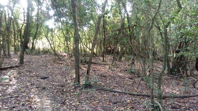 Fazenda/Sítio/Chácara para venda tem 121000 metros quadrados com 4 quartos em Rural - Pora - Foto 17