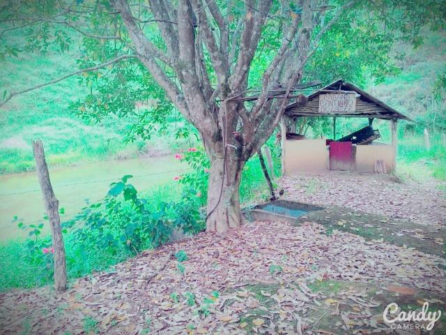 Fazenda Muito Boa na Região Veja a Descrição - Foto 16