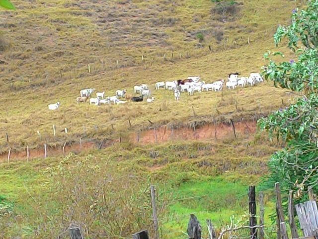Fazenda Muito Boa na Região Veja a Descrição - Foto 10