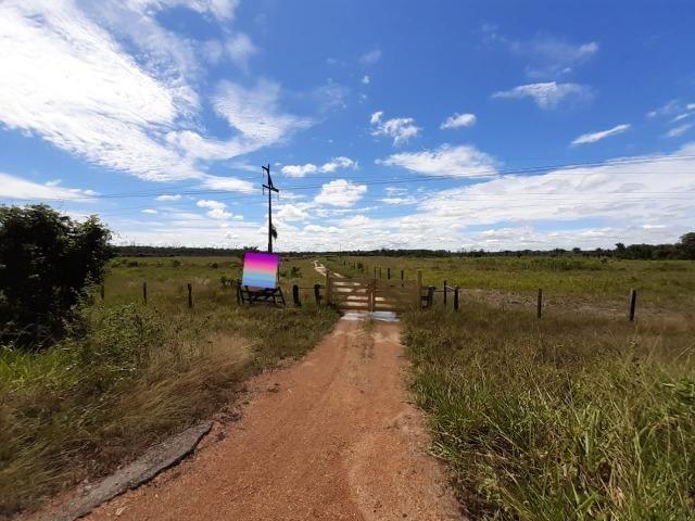 Fazenda com 160 hectares em Mucajai/RR, ler descrição do anuncio - Foto 19