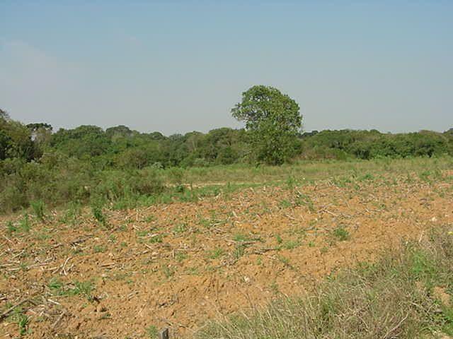 Terreno à venda em Sabiá, Araucária cod:7227-MORO
