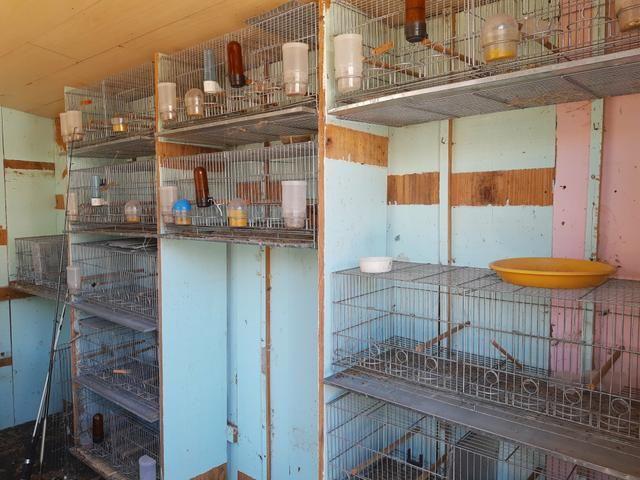 Vendo gaiola criadeira - Foto 3