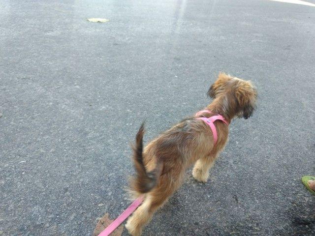 Cachorra fêmea - Foto 4
