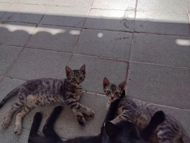 Gatos gatinhos
