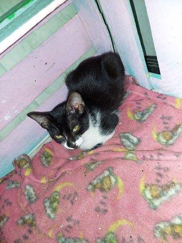 Gatinhos e gatinhas para adoção responsável  - Foto 3