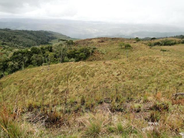 Pense num lugar bonito, sitio 5 hectares a 1000 m de altitude - Foto 13
