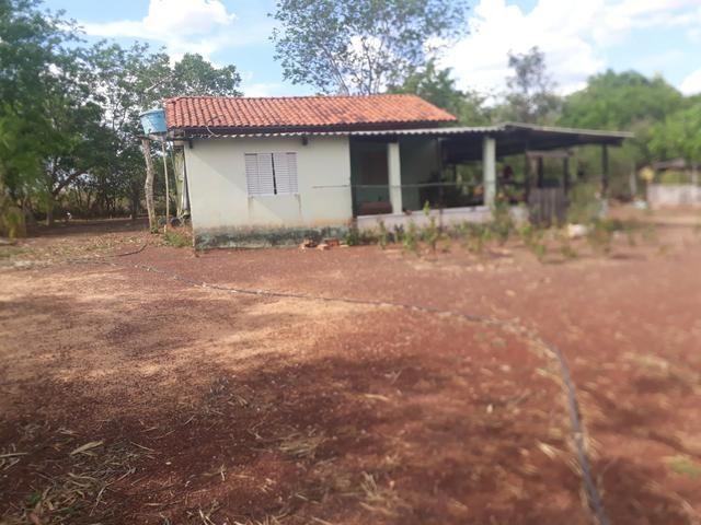 Characara - Foto 2