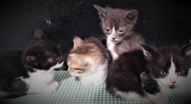 Gatinhos Para Doação - Foto 4