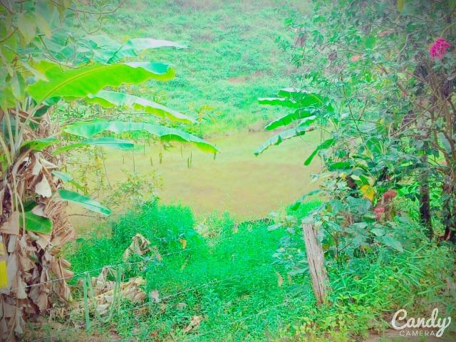 Fazenda Muito Boa na Região Veja a Descrição - Foto 15