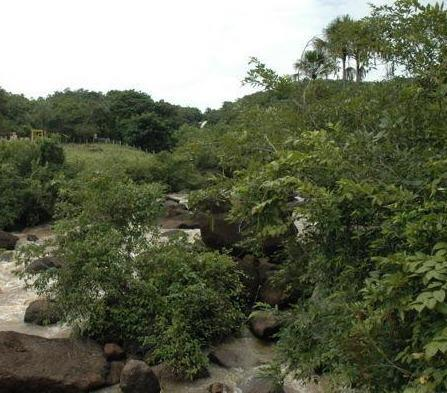 Fazenda serrana, vista para Cachoeira é muita água - Foto 4