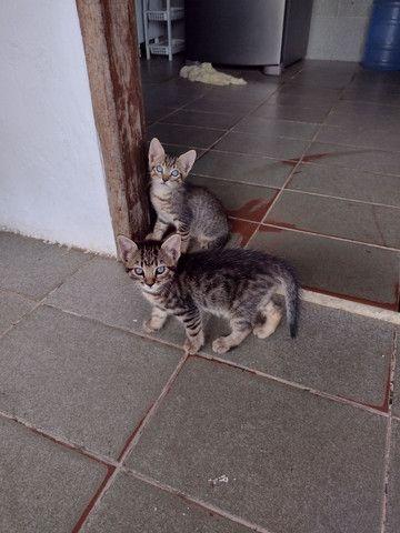 Gatos gatinhos  - Foto 2