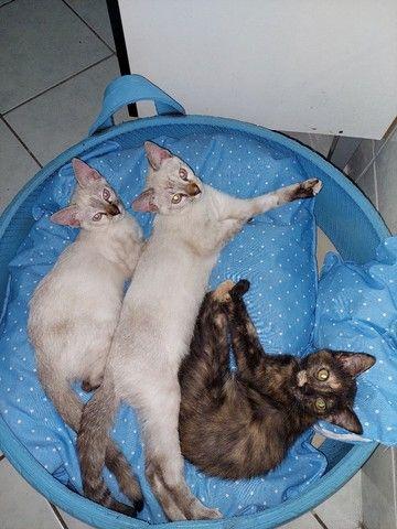 Gatinhos e gatinhas para adoção responsável