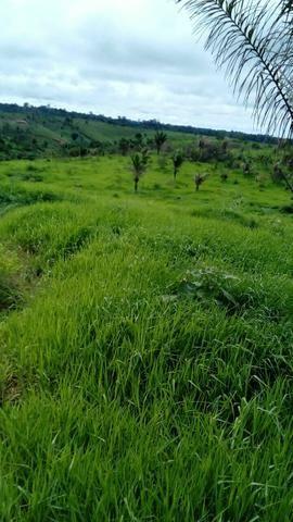 Vendo lote de 100 hectares