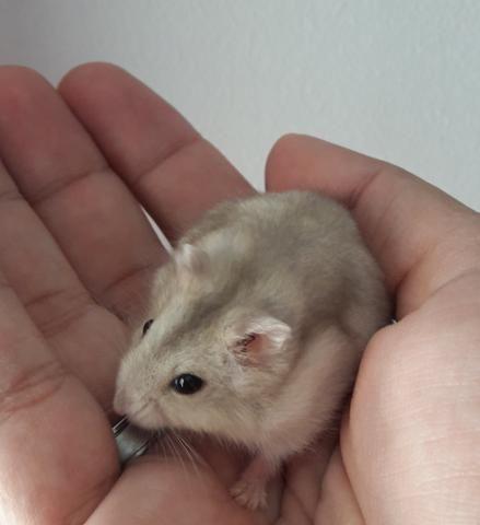 Gaiola completa + Hamster