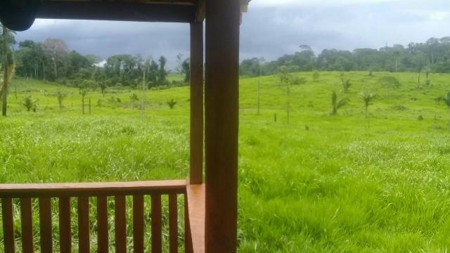 Vendo área de terra com com 15 cabeça de gado - Foto 2