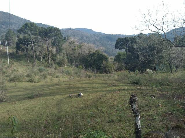 Sitio em Gramado - Foto 3