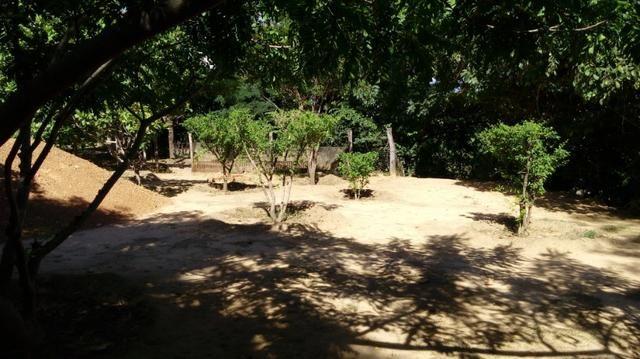 Casa/Rancho na beira do Rio Paranã - Foto 3