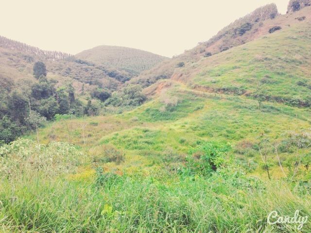 Fazenda Muito Boa na Região Veja a Descrição - Foto 14