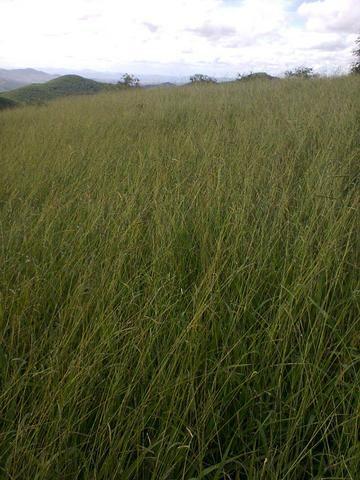 Fazenda Muito Boa na Região Veja a Descrição - Foto 6