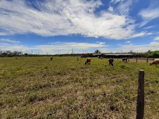 Fazenda com 160 hectares em Mucajai/RR, ler descrição do anuncio - Foto 15