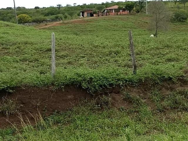 Fazenda 172 tarefas de terra com sede para criaçao de gado e cavalo e plantaçao - Foto 2