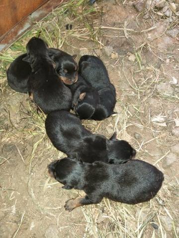 Cachorros - Foto 3