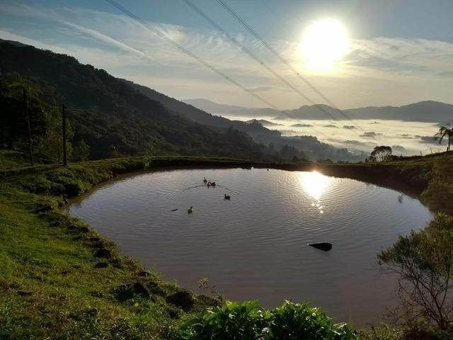 Sítio tifa bom Jesus reflorestamento - Foto 11