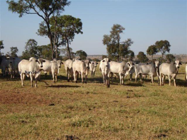 Fazenda em Água Clara - MS - Foto 4