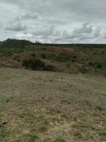 Fazenda 9 alqueires barro vermelho 9 alqueires - Foto 5
