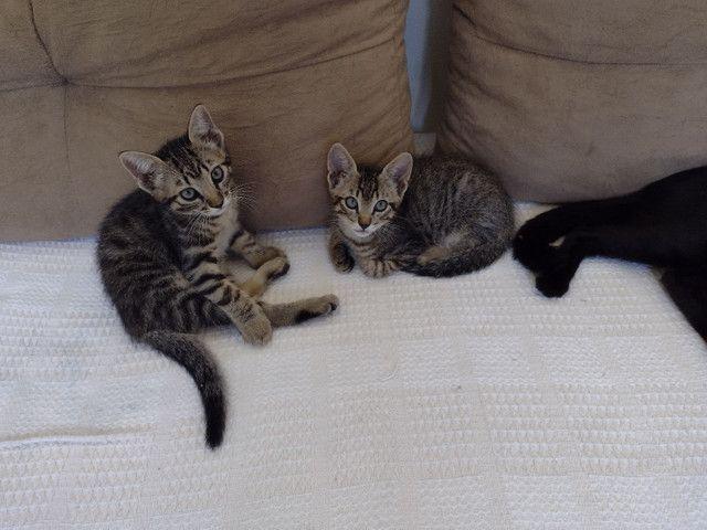 Gatos gatinhos  - Foto 3