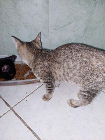 Gatinhos e gatinhas para adoção responsável  - Foto 5