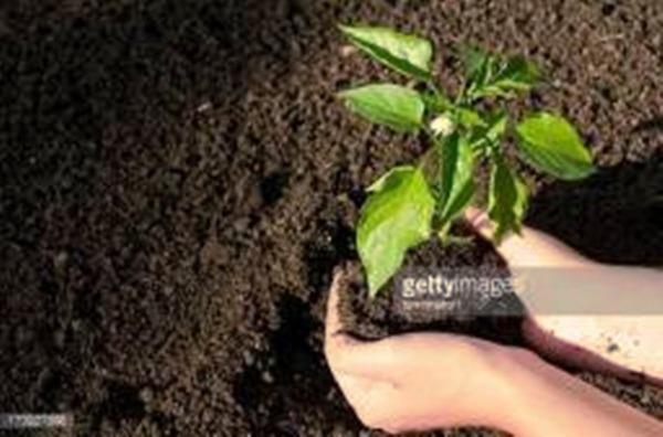 Aproveite as promoções Areia Lavada , Britas 0 -1, Terra vegetal - Foto 3