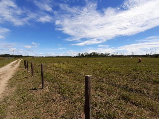 Fazenda com 160 hectares em Mucajai/RR, ler descrição do anuncio - Foto 18