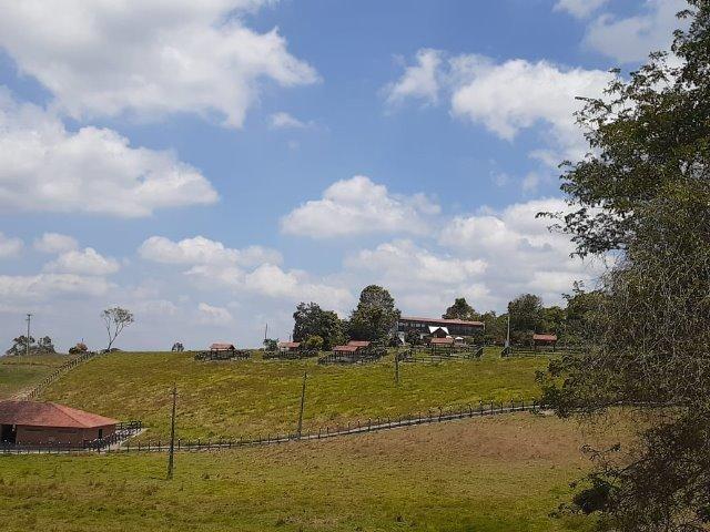 Propriedade com 14 hectares em Sairé (Cód.: fvv56) - Foto 13