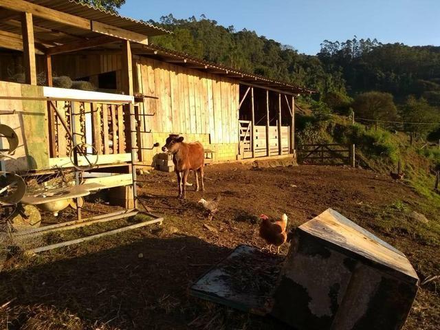 Sítio tifa bom Jesus reflorestamento - Foto 10
