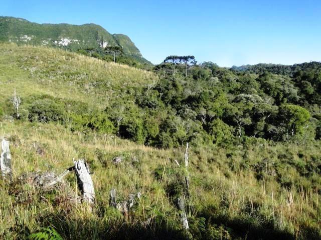 Pense num lugar bonito, sitio 5 hectares a 1000 m de altitude - Foto 6