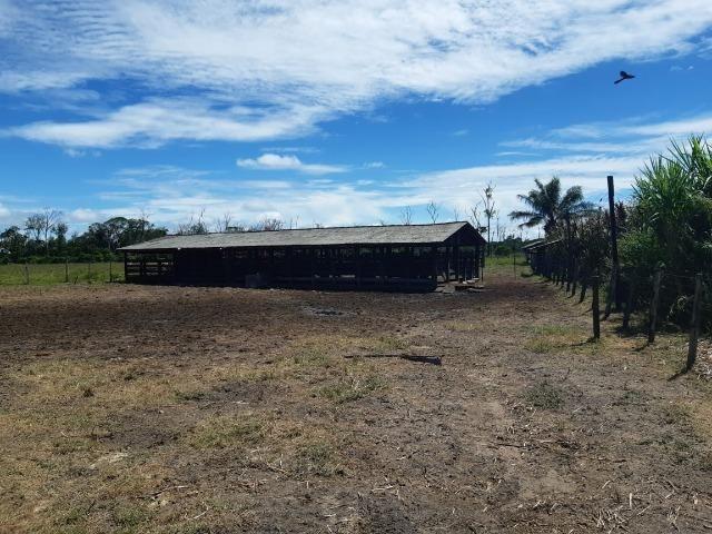 Fazenda com 160 hectares em Mucajai/RR, ler descrição do anuncio - Foto 12