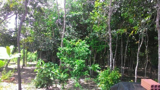 Vendo terreno no cucuruna - Foto 3