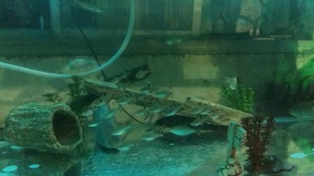 Aquario - Foto 3