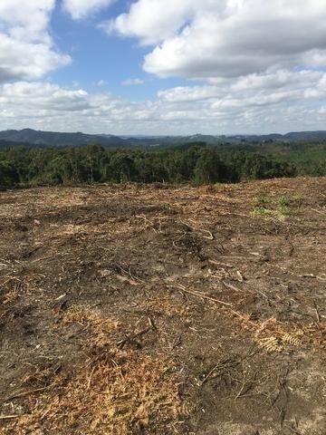 Terreno de planta, e reflorestamento - Foto 4