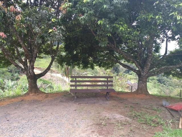 Sítio tifa bom Jesus reflorestamento - Foto 16