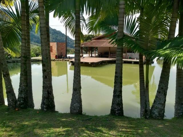 Sítio tifa bom Jesus reflorestamento - Foto 6