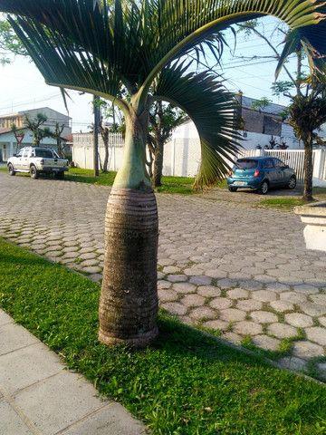 Palmeiras - Foto 6
