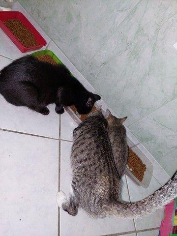 Gatinhos e gatinhas para adoção responsável  - Foto 6